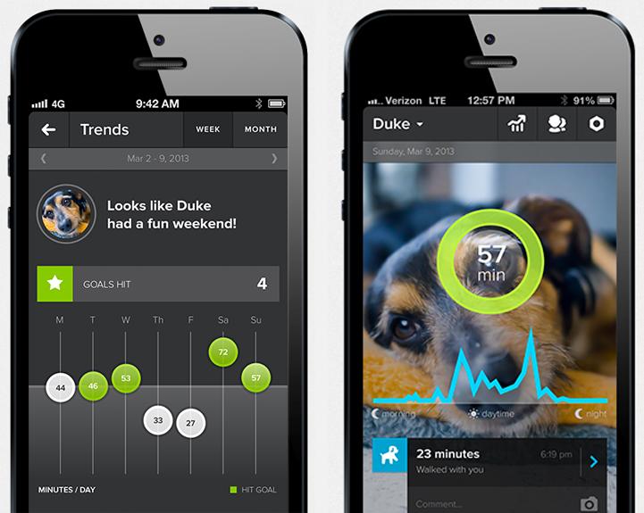 whistle dog activity monitor