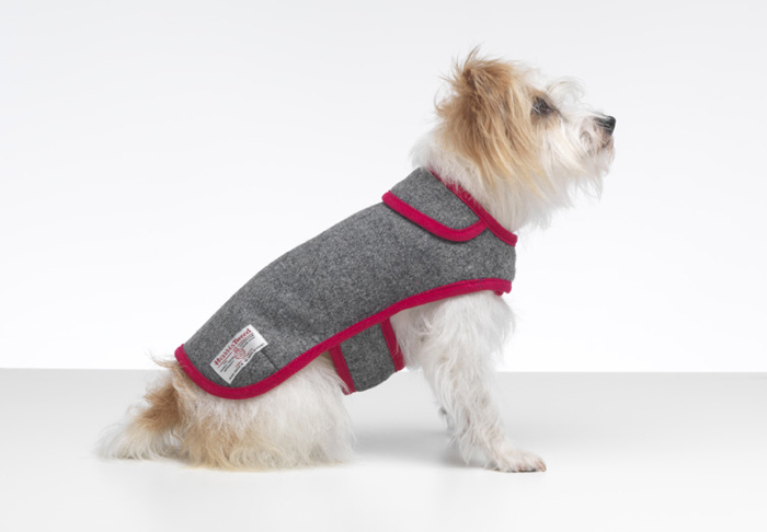 TRENDS | Gorgeous Grey Pet Accessories | STYLETAILS