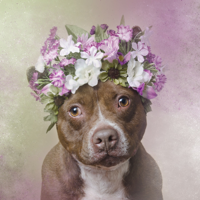 sophie gamand pit bull flower power