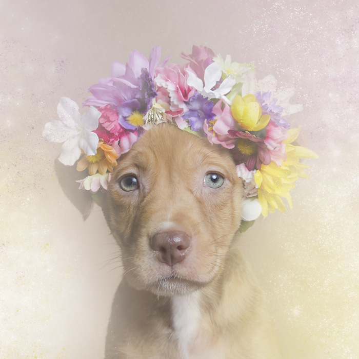 Flower Power Pit bulls Sophie Gamand
