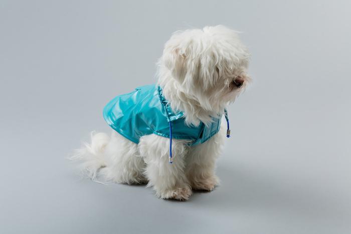 anorak dog raincoat ware of the dog