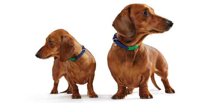 mungo and maud mullbery dog collars and leads
