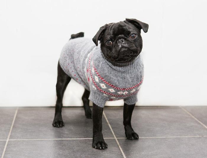 Norwegian Fair Isle dog sweater ruby rufus