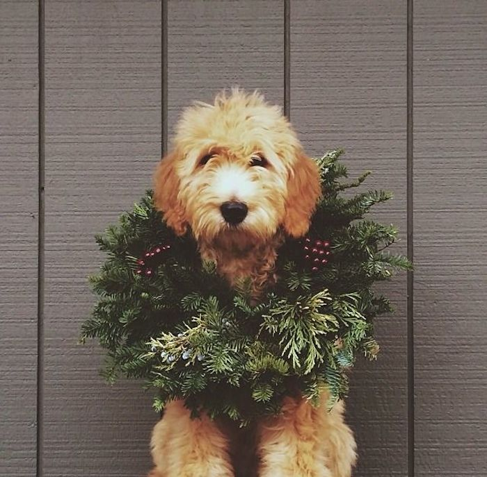 10 reasons why you should not get a dog for Christmas