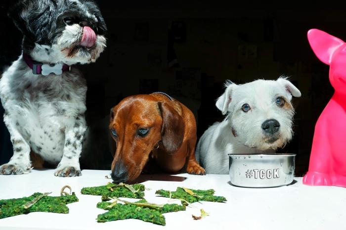 curious canine kitchen holistic dog restaurant
