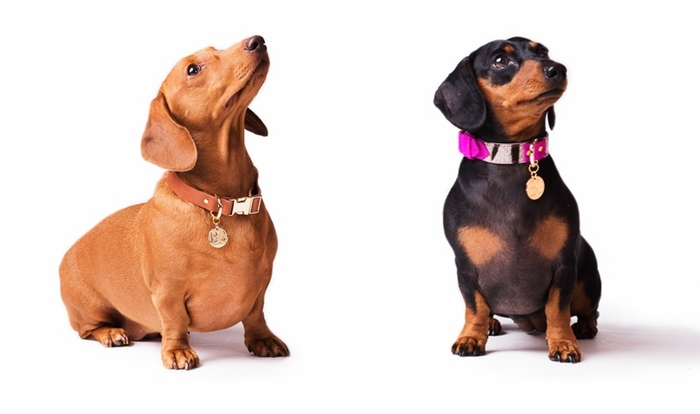 bonnie and grover dog collars