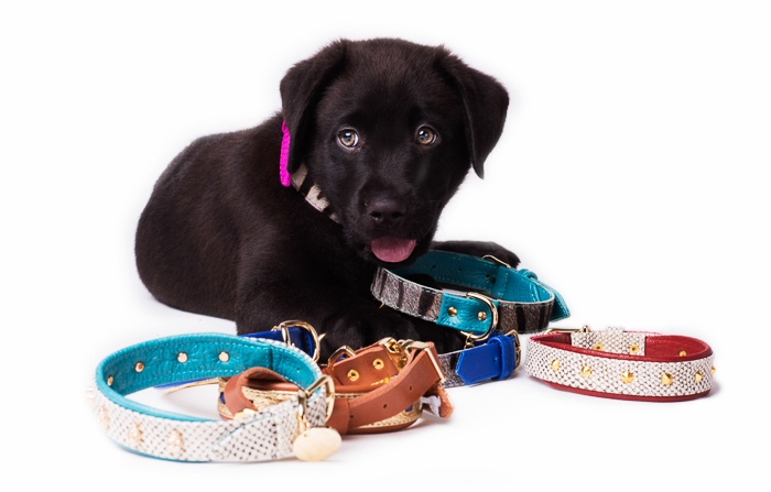 dog collars by Bonnie & Grover
