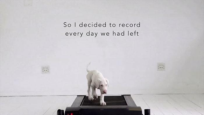 rescued-puppy-growing-up-dave-meinert-7
