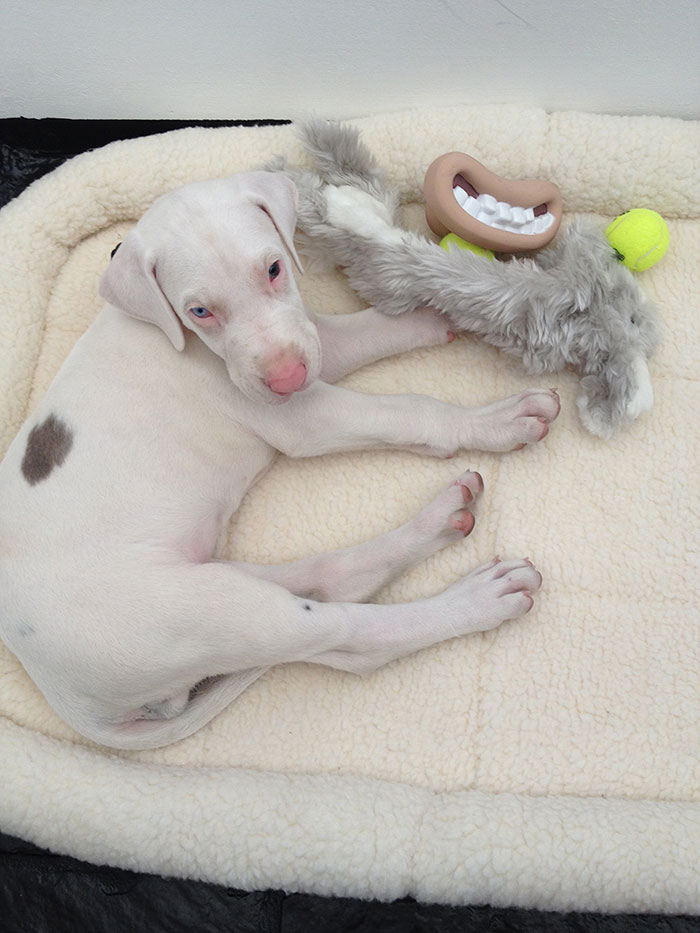 rescued-puppy-growing-up-dave-meinert