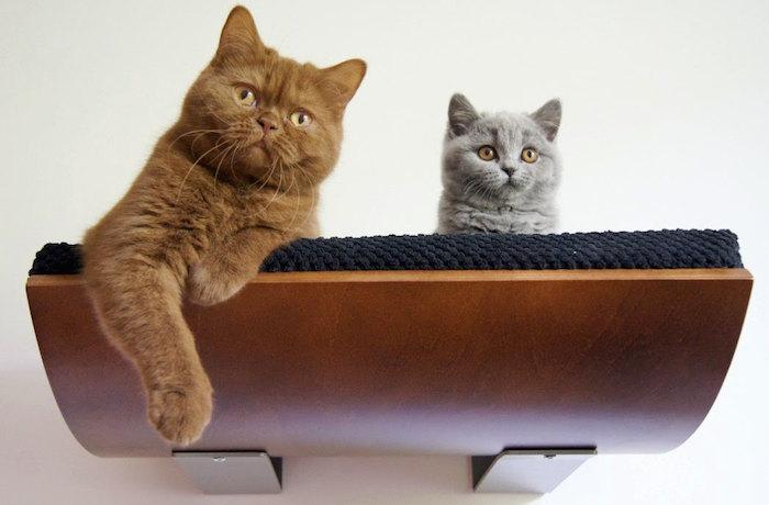cat shelf by cozy and dozy