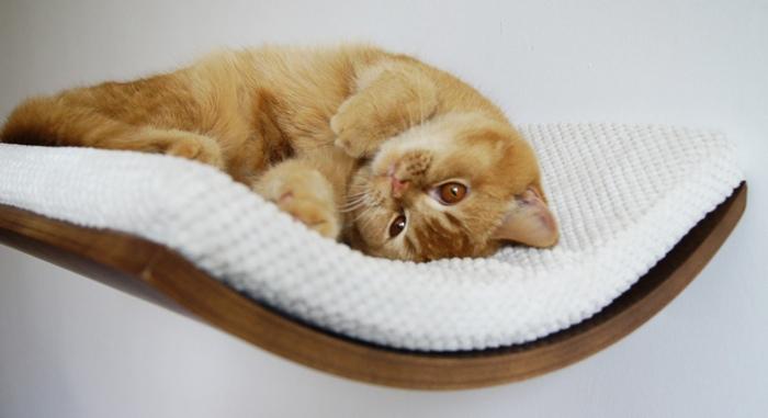 cozy dozy cat perch