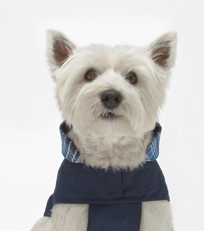 Mungo & Maud for Mulberry dog coat