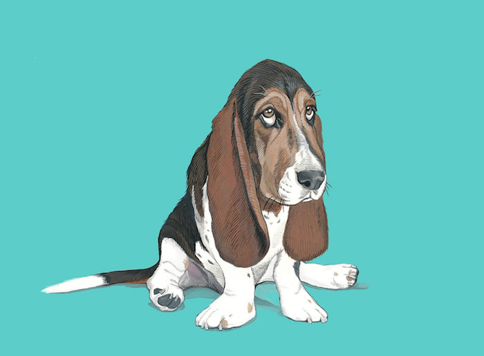 POP Art Pet Portrait - Art by Manda