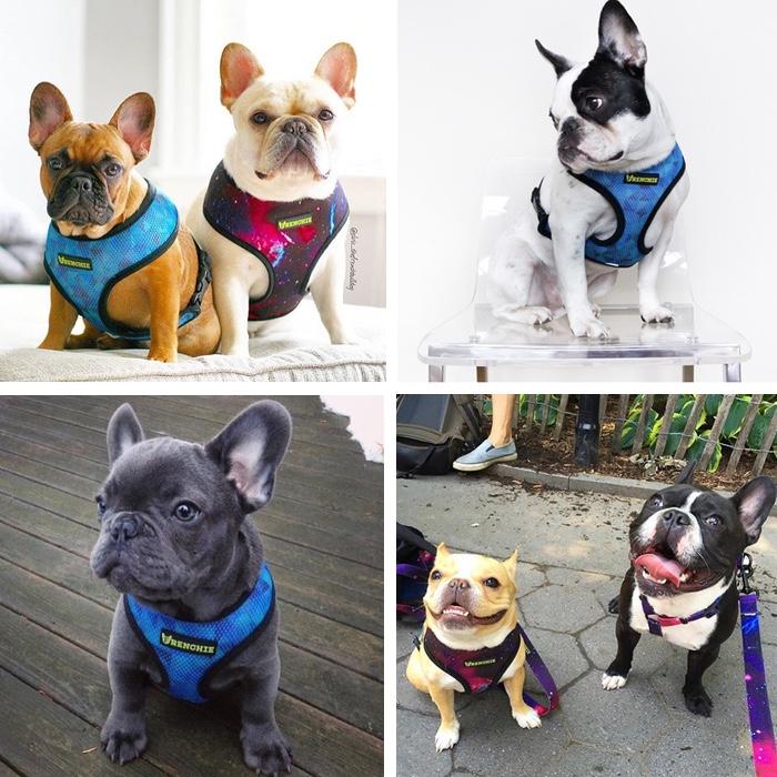 Frenchie bulldog supply harnesses