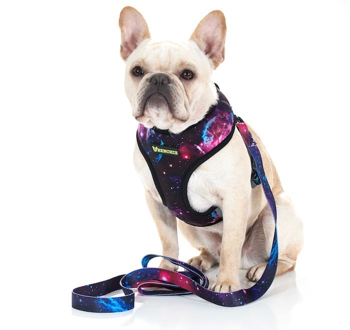 frenchie bulldog supply galaxy dog harness