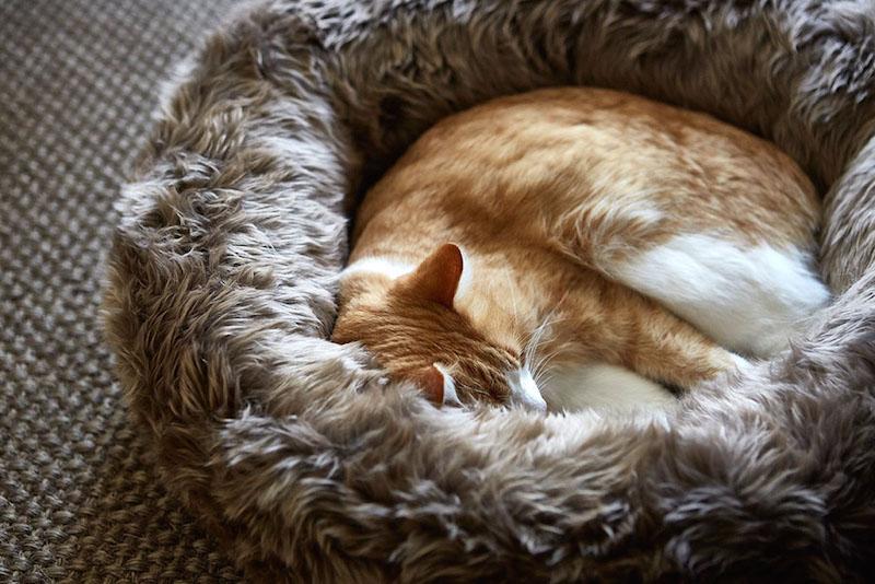 Miacara Gatto Designer Furniture For Cats Styletails