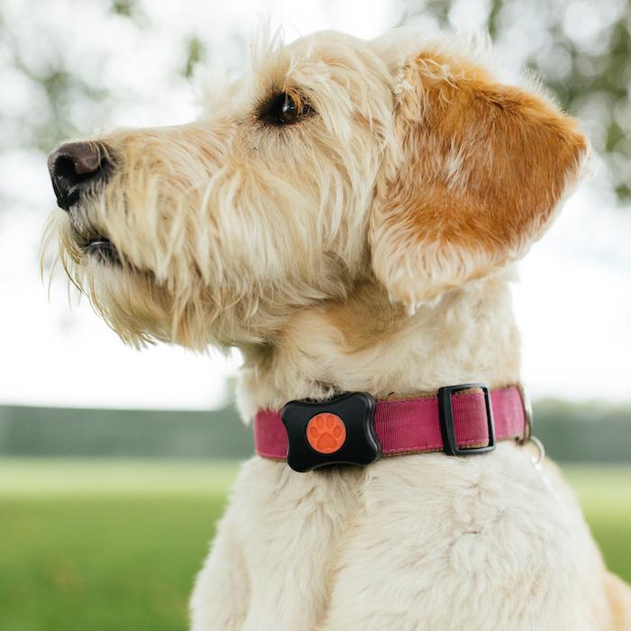 Pitpat dog fitness monitor