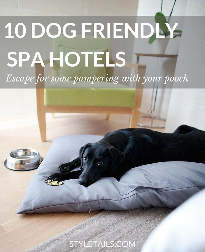 dog friendly spa hotels in the UK
