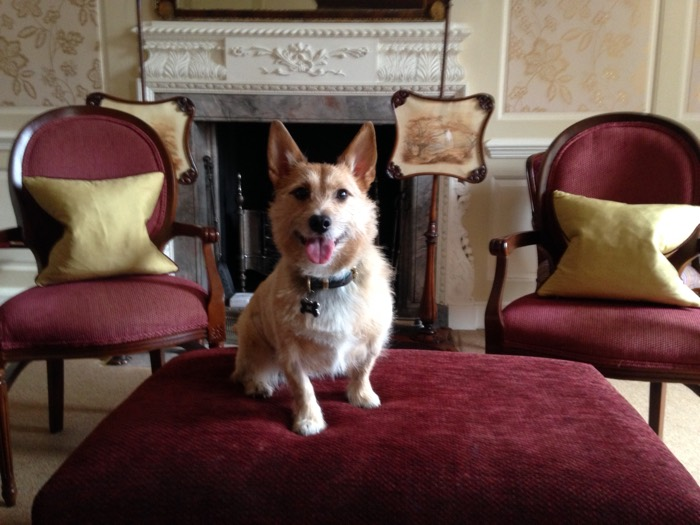 Ston Easton Park Dog Friendly Hotel In Bath Styletails