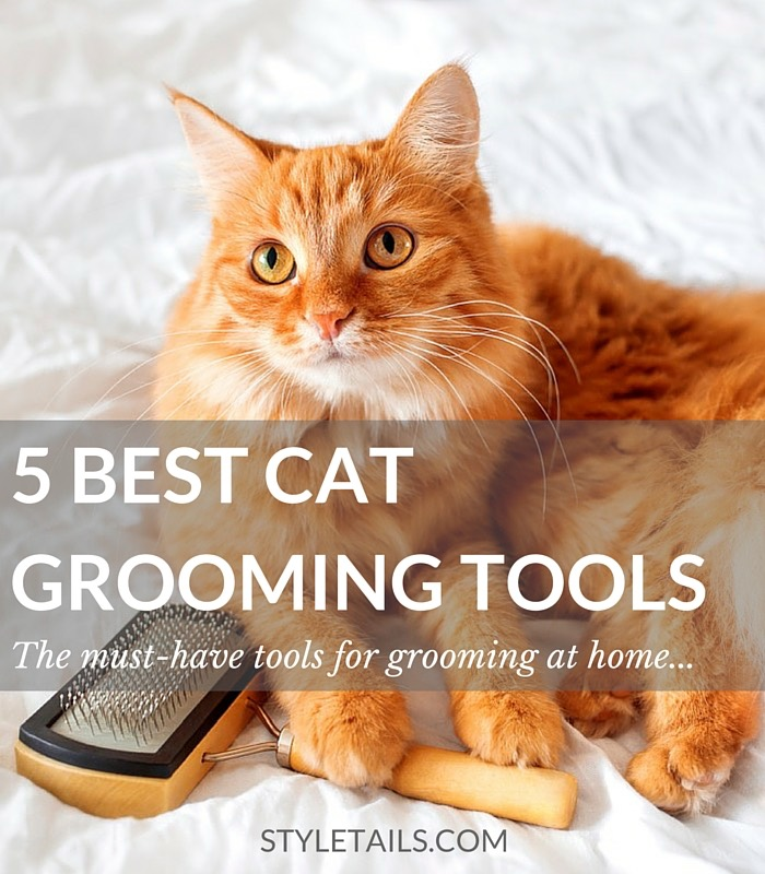 5 OF THE BEST CAT GROOMING TOOLS