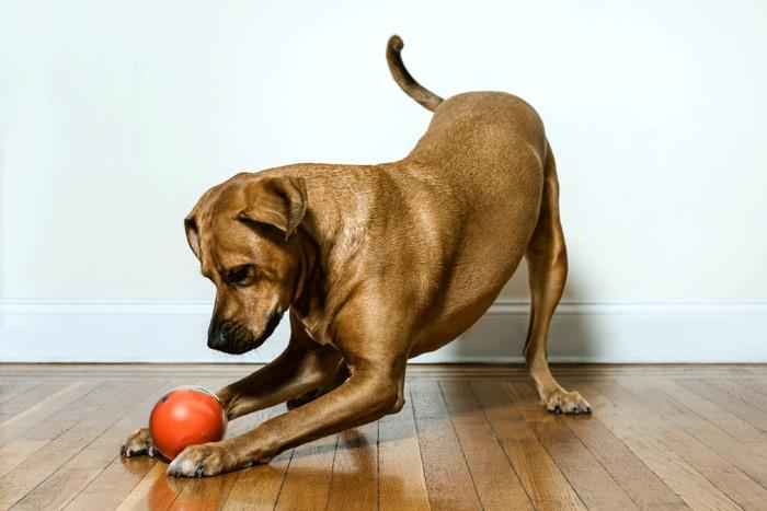 playdate smart dog ball