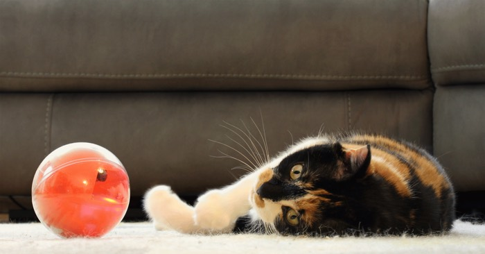 playdate smart cat toy