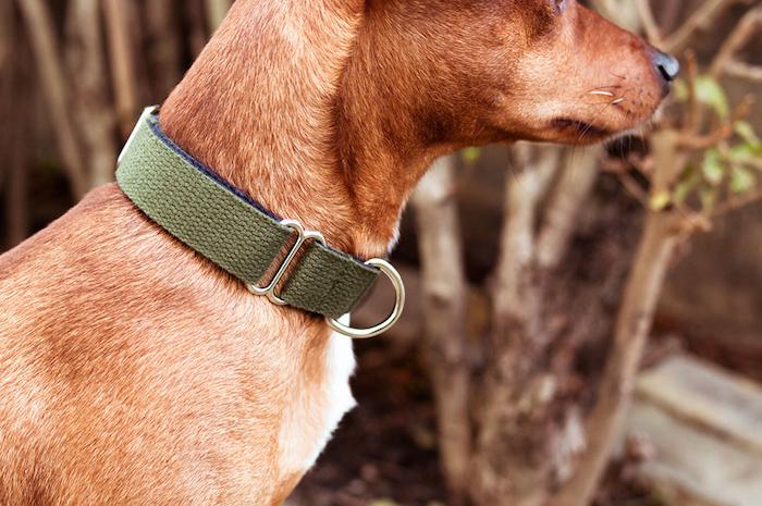 vackertass cotton webbing dog collar