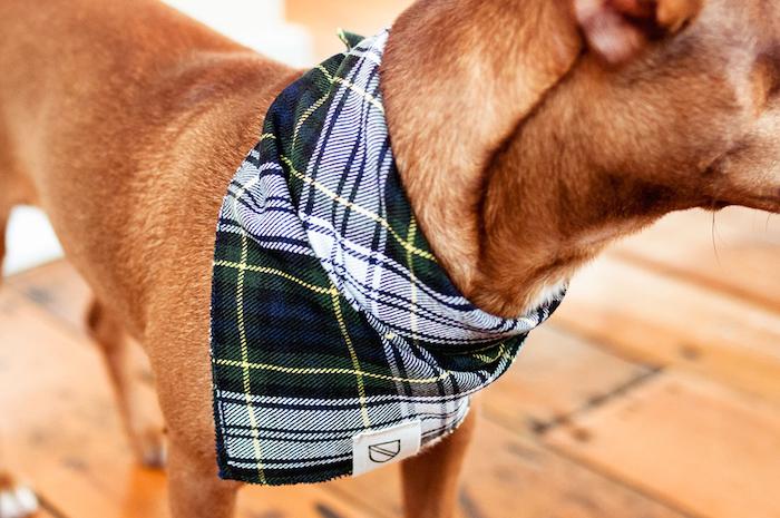 vackertass dog neckerchief