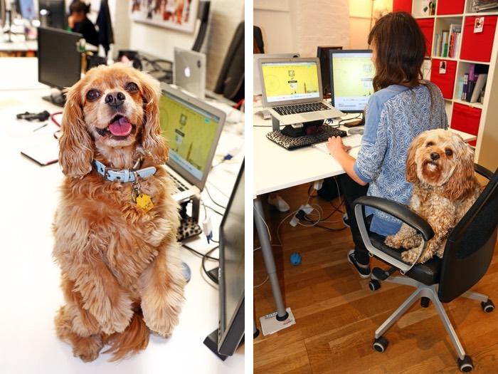 Bring Your Dog to Work - Borrow My Doggy