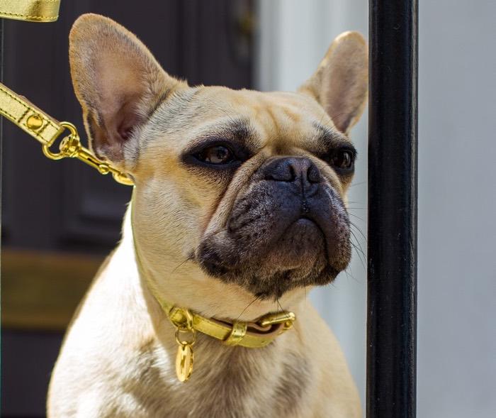 dogatella metallic gold leather dog collar and lead