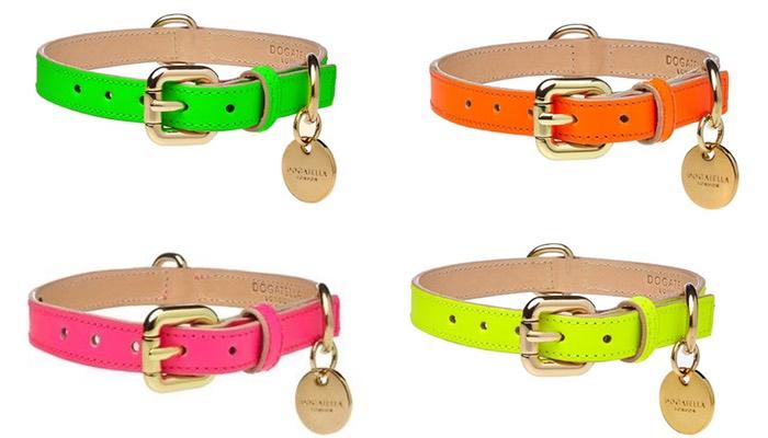 neon dog collars by dogatella