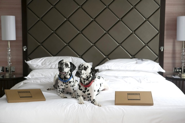 Sheraton Grand London Park Lane Dog Friendly Package