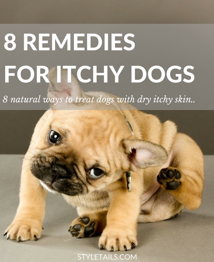 8 Natural Ways to Treat Dry and Itchy Skin in Dogs
