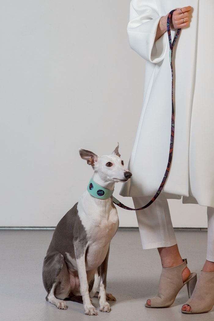 sprite dog collar and lead