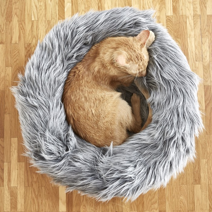 10 of the Best Designer Cat Beds | STYLETAILS