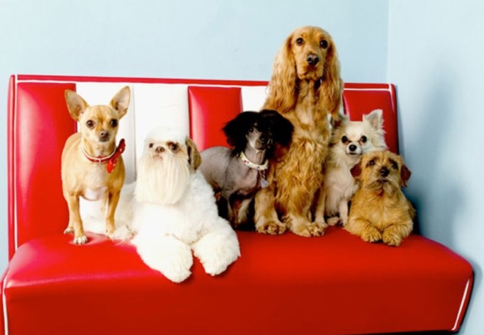 Uk Best Dog Grooming Salons And Pet Spas Styletails