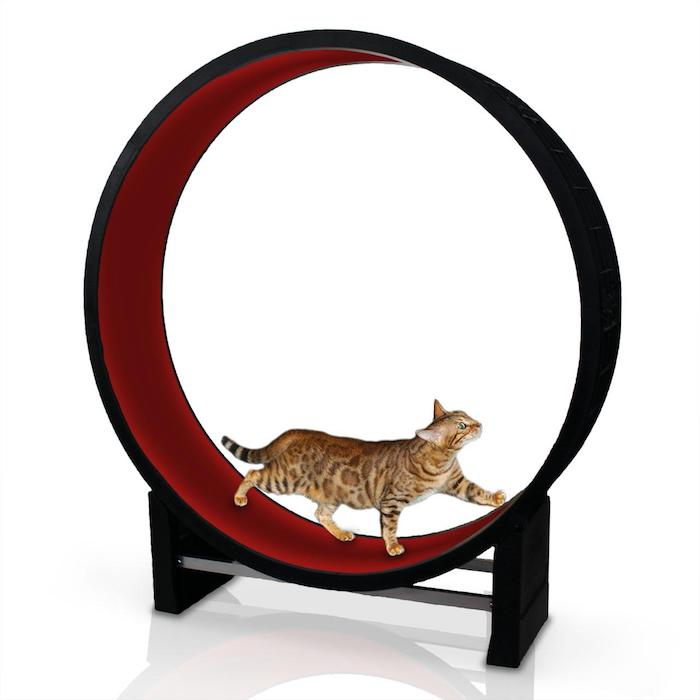 7 incredible indoor exercise wheels for cats styletails. Black Bedroom Furniture Sets. Home Design Ideas