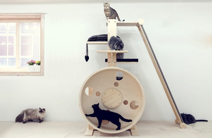 7 Incredible Indoor Exercise Wheels For Cats Styletails