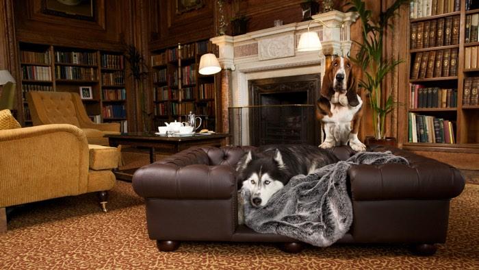 cliveden house dog friendly hotel berkshire