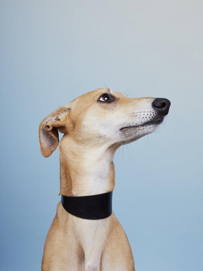 alma haser dog portraits affordable art fair london