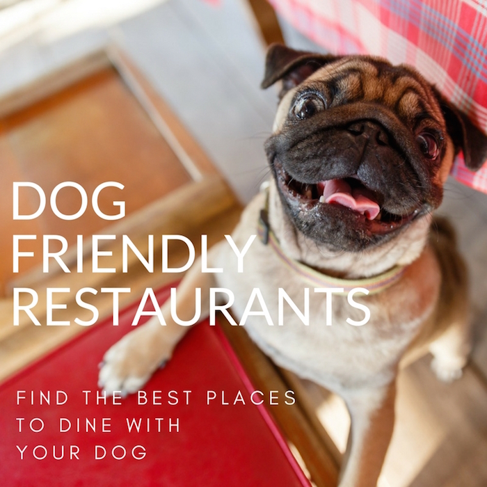 DOG FRIENDLY RESTAURANTS STYLETAILS LUXE PET GUIDE