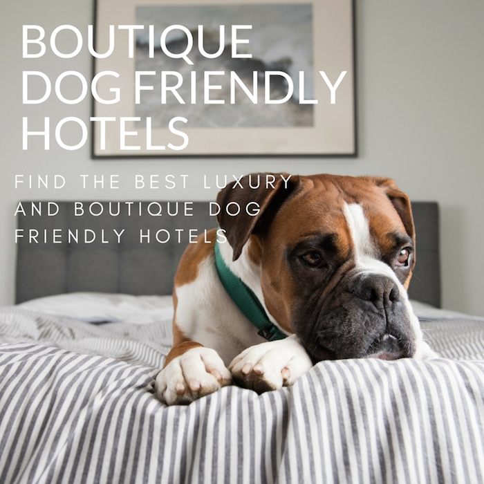 LUXURY DOG FRIENDLY HOTELS STYLETAILS LUXE PET GUIDE