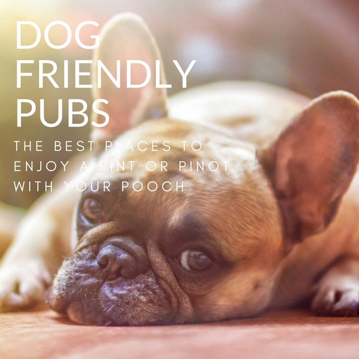 THE BEST DOG FRIENDLY PUBS STYLETAILS LUXE PET GUIDE