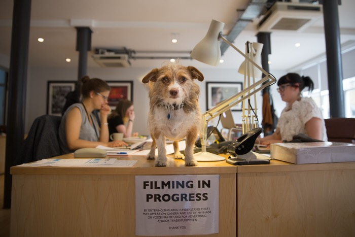 Dog Friendly Workplaces RSA Films