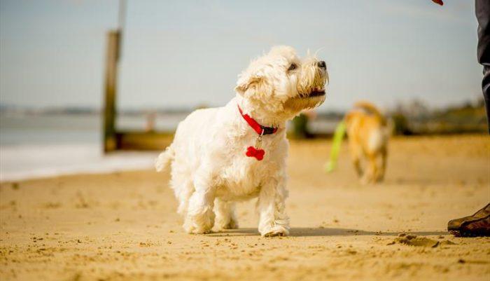 Hengistbury Beach Bournemouth Dog Friendly beach