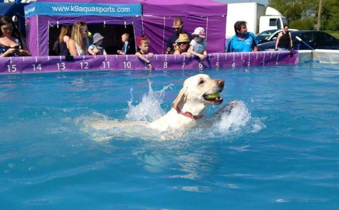 K9 Aqua Dog Friendly Swimming