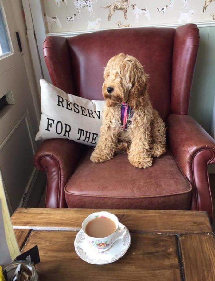 The Wagging Tail Dog Friendly Cafe