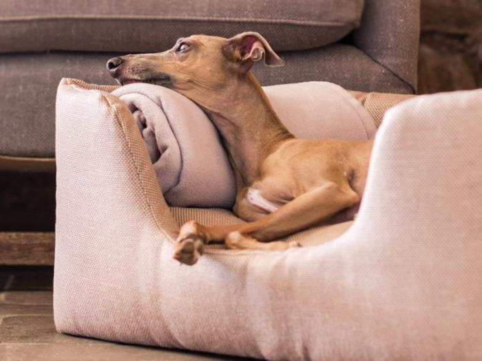 Deeply Dishy Dog Bed Charley Chau