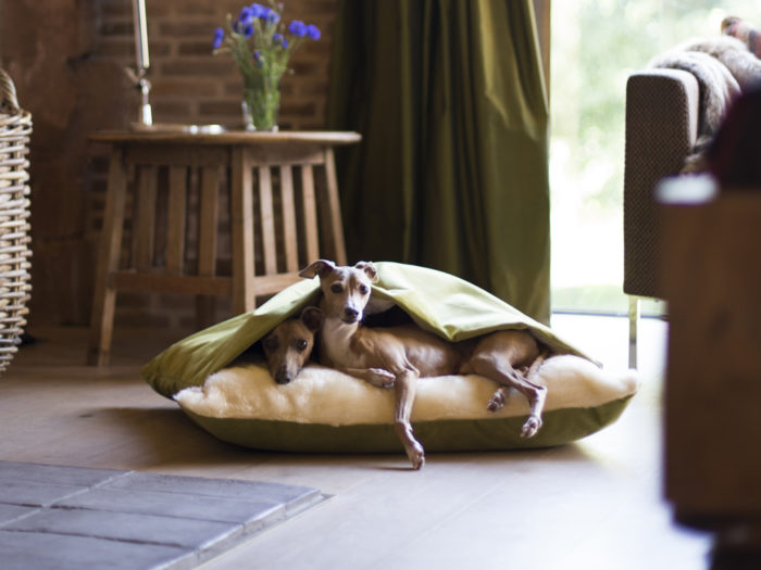 Charley Chau Snuggle Bed in Velour Lime