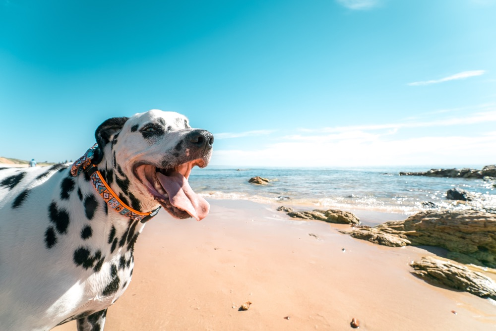 best dog friendly beaches uk